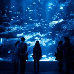 石川県/金沢/のとじま水族館の婚活パーティー