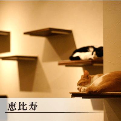 東京都/恵比寿・広尾/Nyafe Melange♪の婚活パーティー