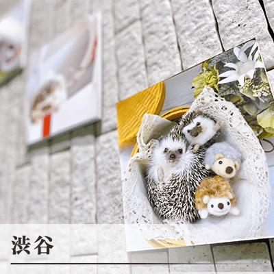 東京都/渋谷・表参道/ちくちくカフェ(ハリネズミ)の婚活パーティー