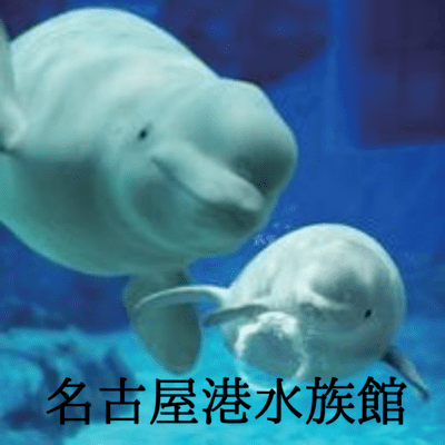 愛知県/その他名古屋市内/名古屋港水族館の婚活パーティー