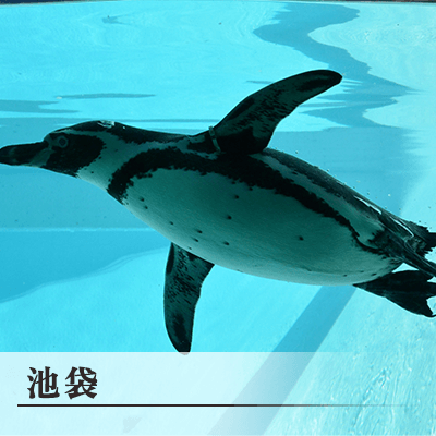 東京都/池袋/サンシャイン水族館(エレベーター前)の婚活パーティー