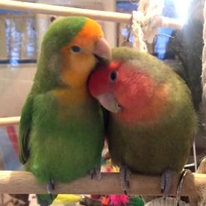 《趣味コン♥癒しの小鳥カフェ》つぶらな瞳にキュン♥自然に仲良く♪