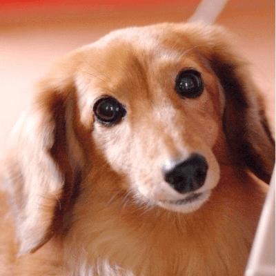 《趣味コン☆犬カフェ編》可愛いワンちゃんと一緒にディナーを嗜む♪