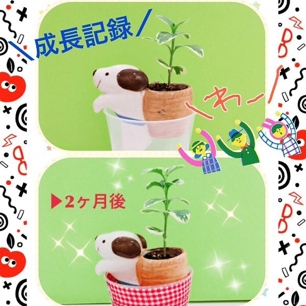恋も植物も育て方が肝心です♡