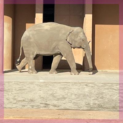 動物たちに癒されて♡2人のベストショットを激写in東山動物園