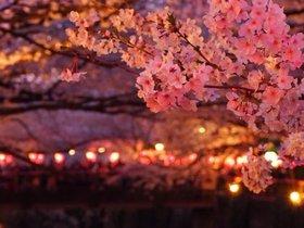 夜桜を楽しむパーティー