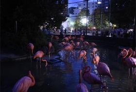 夜の上野動物園のフラミンゴ
