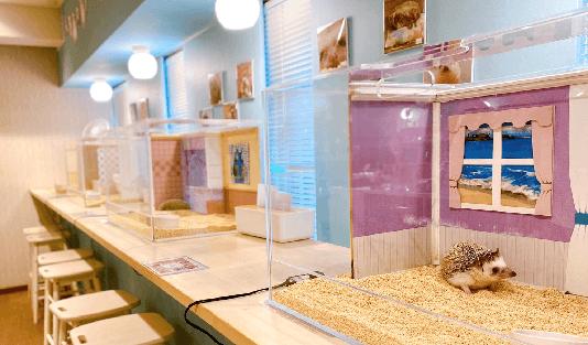 動物カフェ婚活