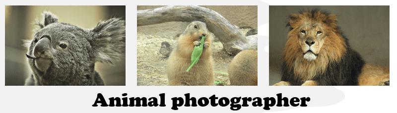 動物写真コンテスト
