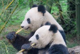 動物園でパンダが見れる