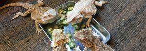 爬虫類の写真