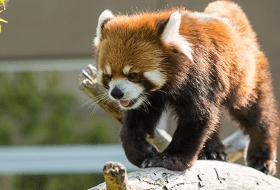 動物王国の動物イメージ