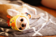 犬カフェコン