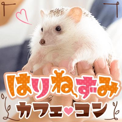 【渋谷】《動物カフェコン♥ハリネズミ編》動物好きの優しい方大集合♡