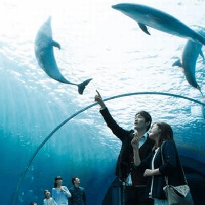 《同年代》×《水族館》で距離も縮まる♡ グループ婚活in海遊館