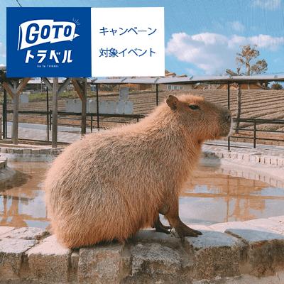 《大阪⇔ハーベストの丘》昼食はBBQ食べ放題付き♪日帰りバスツアー