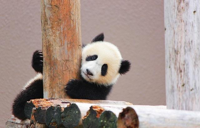 会話のきっかけがつくりやすい♪動物園コンを取材!
