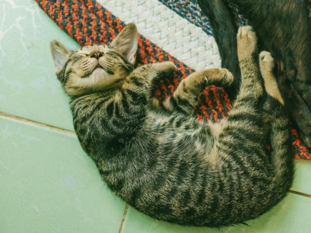 猫好きな人の恋愛的傾向
