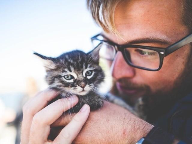 男女別、猫好きな人へのアプローチするコツ