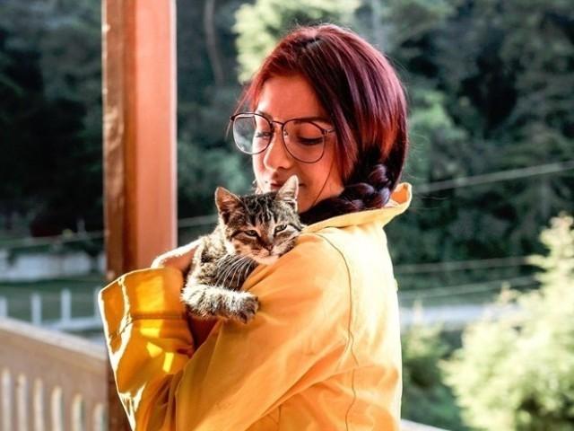 """猫好きと出会える""""猫カフェコン""""とは?"""